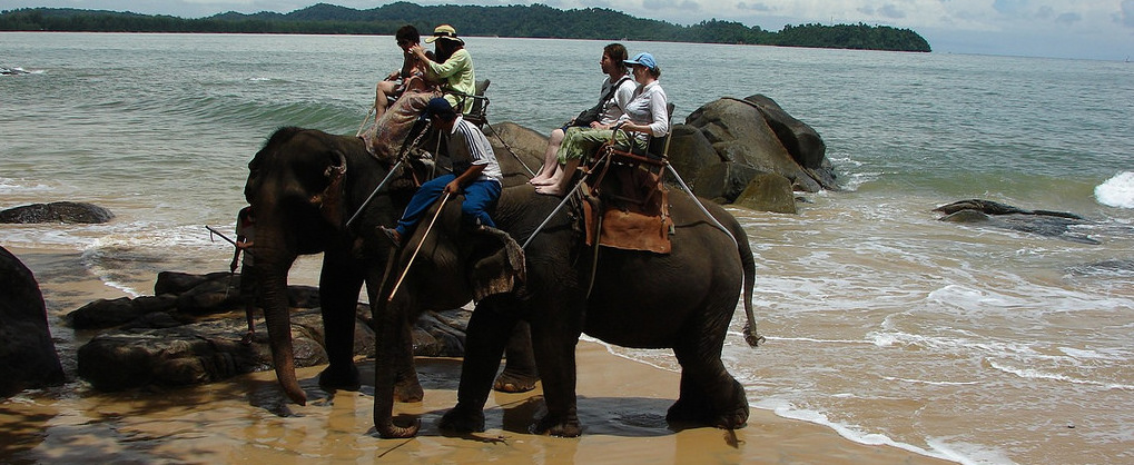 Compassionate travel: say no to wildlife interaction!title=